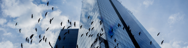 bird-safe-glass-blog1.jpg